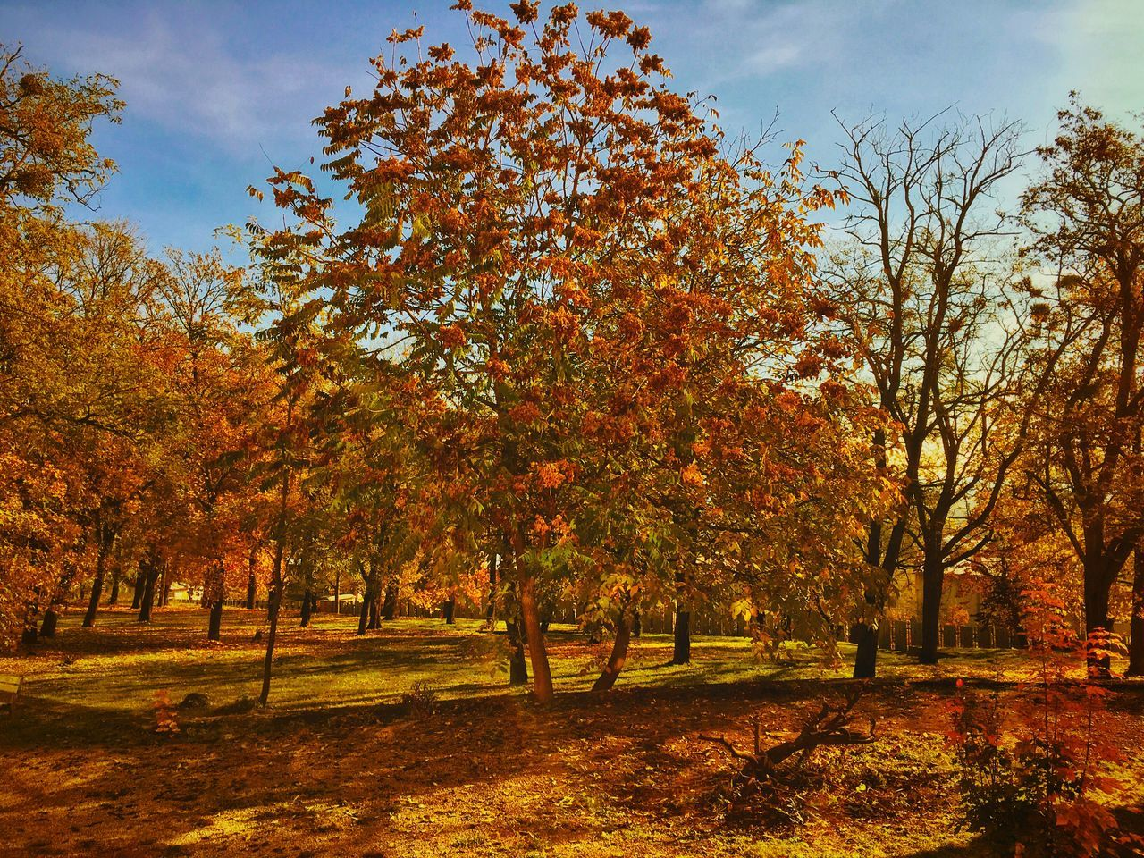 tree, autumn, nature, change, tranquility, beauty in nature, growth, tranquil scene, branch, no people, outdoors, scenics, sky, leaf, landscape, day