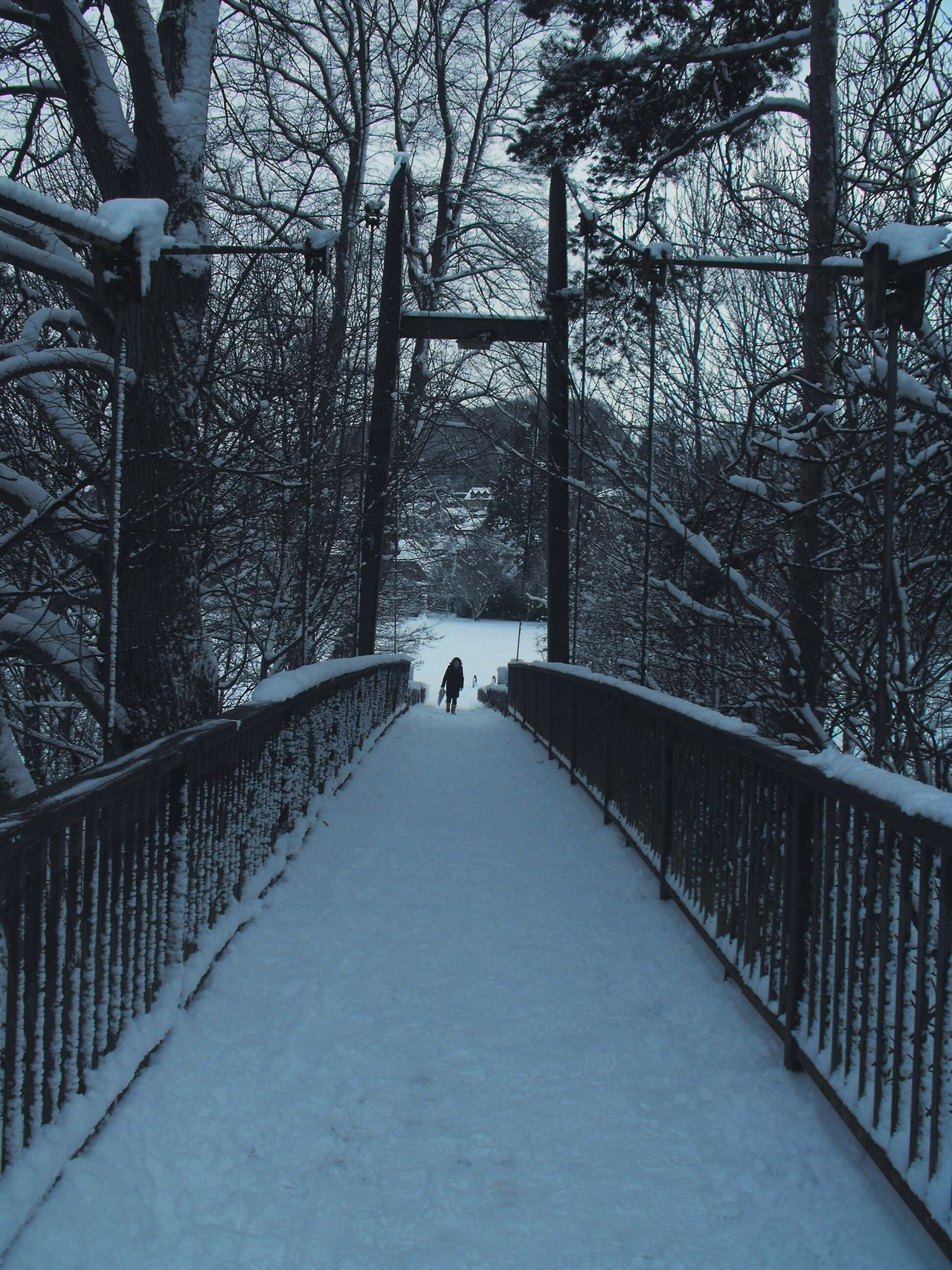 ... from another Winter here in Newtown ... Bridge Newtown Powys Snow Tree Cold Temperature One Person Park Wales Trees Walking снег мост деревья