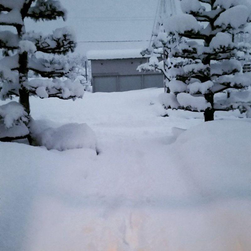 大雪 (@_@) 福井 寒すぎる 1月2日 snow 🏂