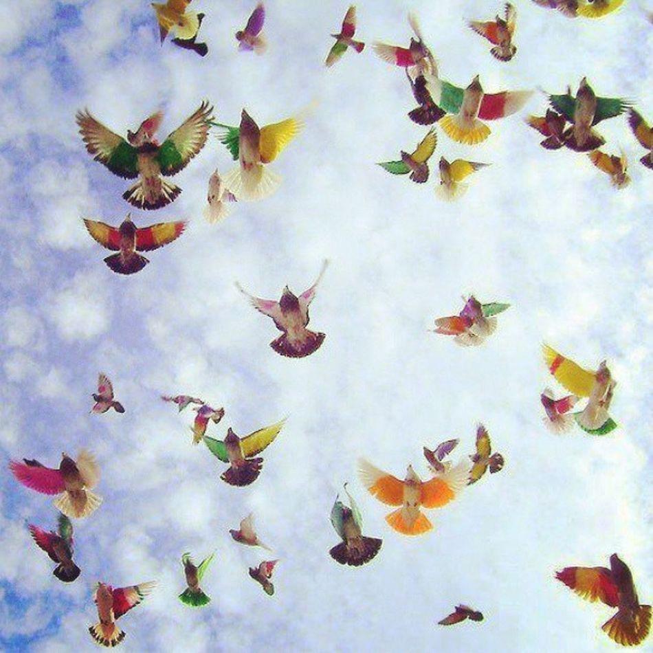 La Vida Esta Llena de Aves que nos Llevan La Mirada en Distintas Direcciones, Esta en Ti Saber Elegir y no Equivocarse ...