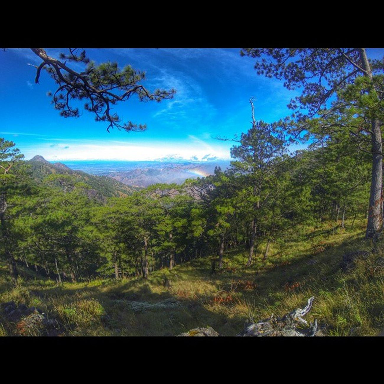 View from trail to Pakpako campsite on the way to Mt. Sicapoo AIDSventure AsankaAids Travelph Travel Phmountains Mountain MtSicapoo Pineforest Rainbow GoProHero3BE Goprophilippines Goprotravel Goproph  Itravel Itsmorefuninthephilippines