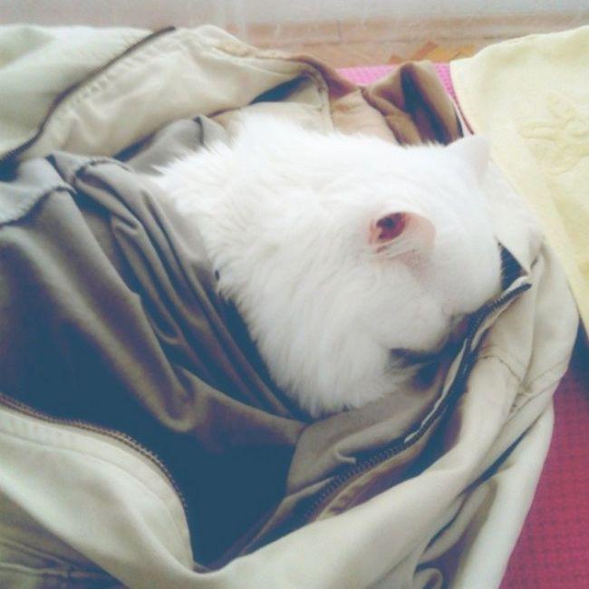 hayat bazen bir kedinin gördüğü yerden çok biraz uyku Cat Kedi Maya Mayukhan kediliev iyigeceler goodnight instacat instagood uyku vankedisi