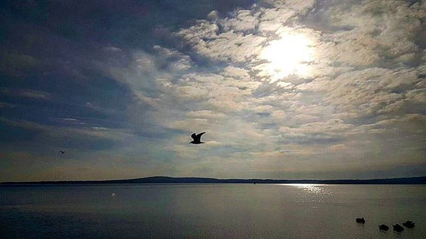 Bracciano's lake..awesome afternoon..!!Braccianolake Bracciano Lake Colours Blu Sunshine Clouds Relaxing Relax Panoramic Ibeliveicanfly Réflexion Afternoon Igerslazio Orizon