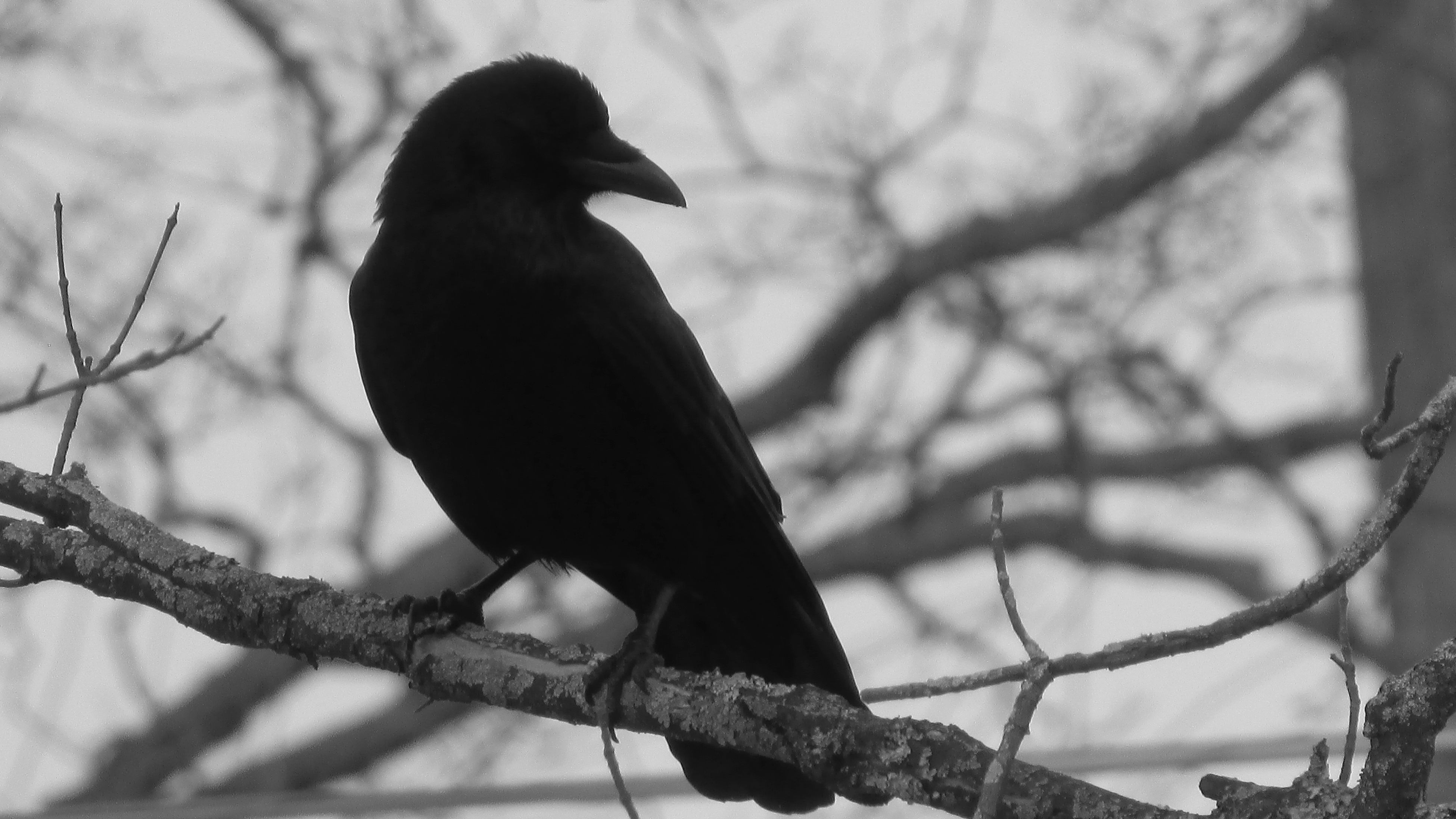 My Neighborhood Black And White Photography Been Hanging Around Lately Birdwatching Just Chilling Cadillac Michigan