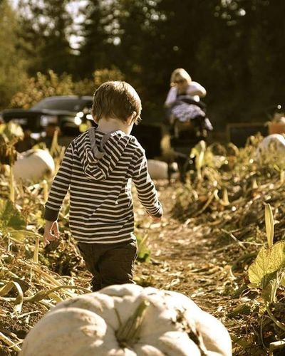 Pumpkinpatch Pumpkinfest Coastalblack Toddler  Kidsofinstagram Fall Fall2015 Outdoors Outdoorfun Comoxvalley Blackcreek Vancouverisland Britishcolumbia