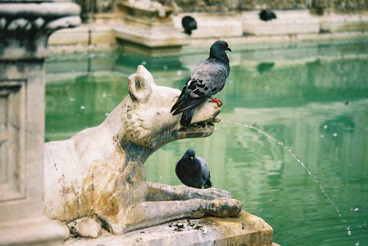 Fountain with Pidgeons, Piazza del Campo Spray Animal Representation Animal Themes Animals In The Wild Bird Composition Creativity Day Focus On Foreground Fountain Full Frame Italy Nature No People Outdoor Photography Outdoors Perching Piazza Del Campo Reflection Sculpture Siena Statue Tourist Attraction  Water Wildlife
