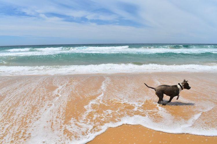 Bermigui Sea Pets Beach Water Sand Nature Scenics Wave Outdoors