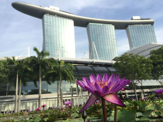 Flower Freshness Growth Architecture Fragility Built Structure Petal Flower Head Marina Bay Sands EyeEm Gallery Eyeem Singapore City Close-up Building Exterior Modern Tall - High Building Story Water Nature Sky Beauty In Nature Plant IPhoneography No Edit/no Filter