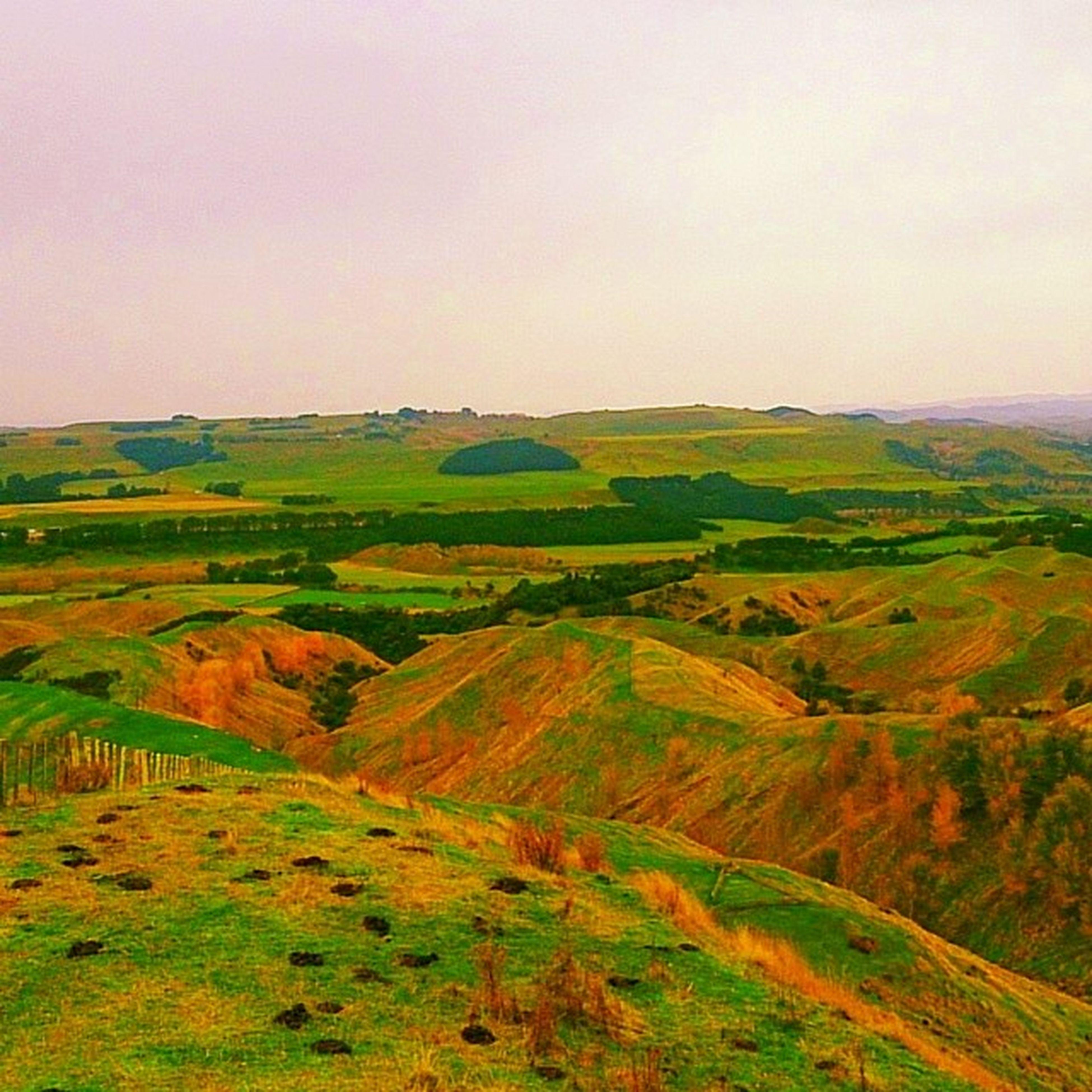 Vinegarhill Hill NZ