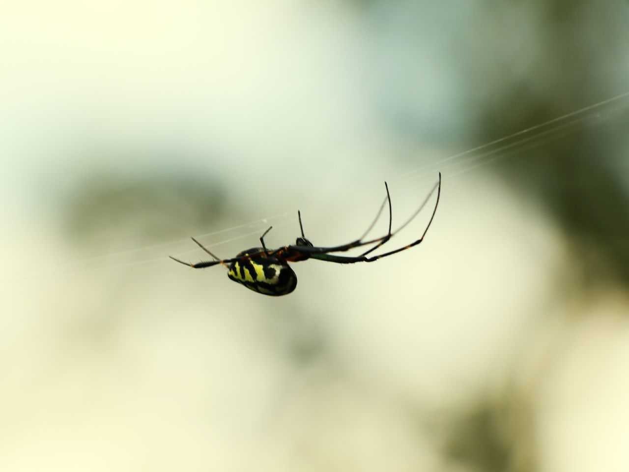 Spiderworld Shades Of Nature Shades Of The Sky Colour Composotions Nature_collection Tiny