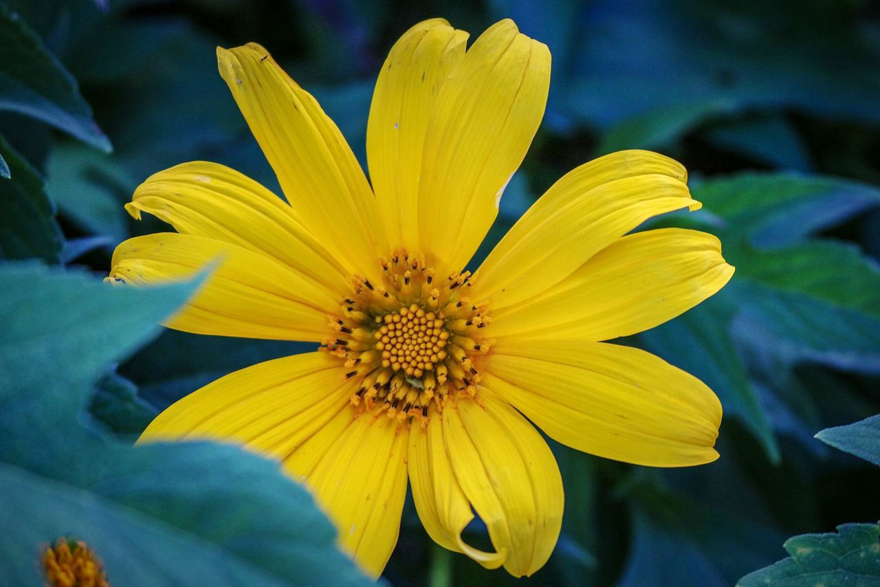 A flower Yellow Nature Beauty In Nature Close-up Wonderfulindonesia Photography Blossom Macro