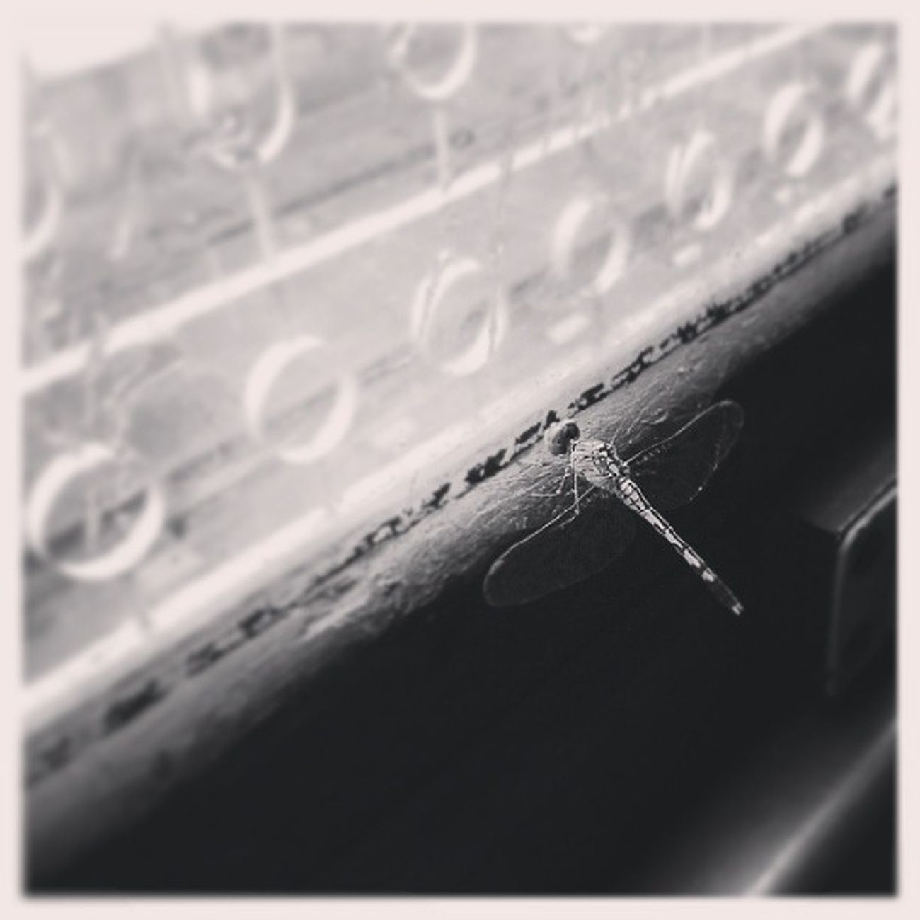 Dragonfly CabinNo4 Instaeveryday Heartit 15Jul13 Insect Train Windowsill Glass Raining