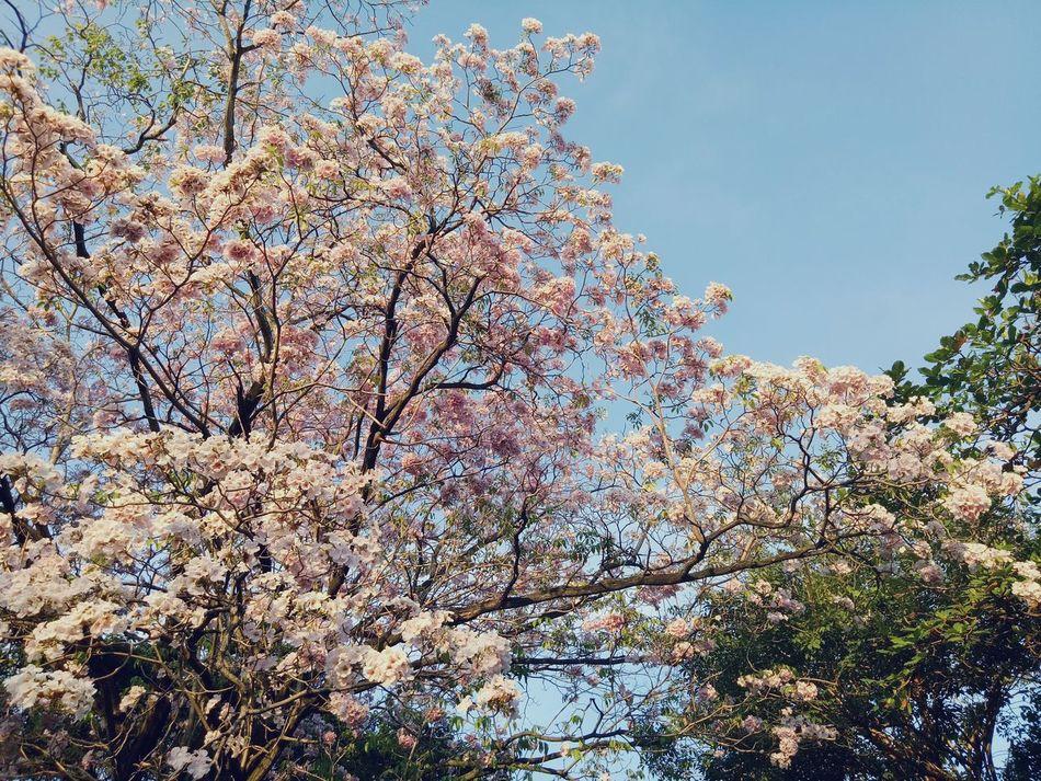 Nature Tree Flowers,Plants & Garden Beauty In Nature Ladkrabang