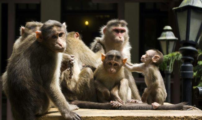 family hangout Hanging Out Taking Photos Mumbai Wildlife