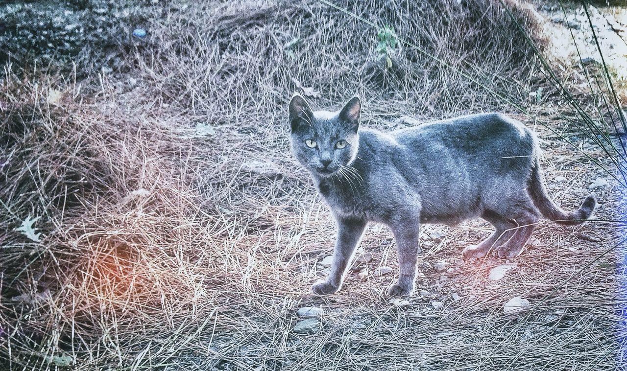 Beautiful stock photos of puma, Alertness, Animal Themes, Auto Post Production Filter, Cat
