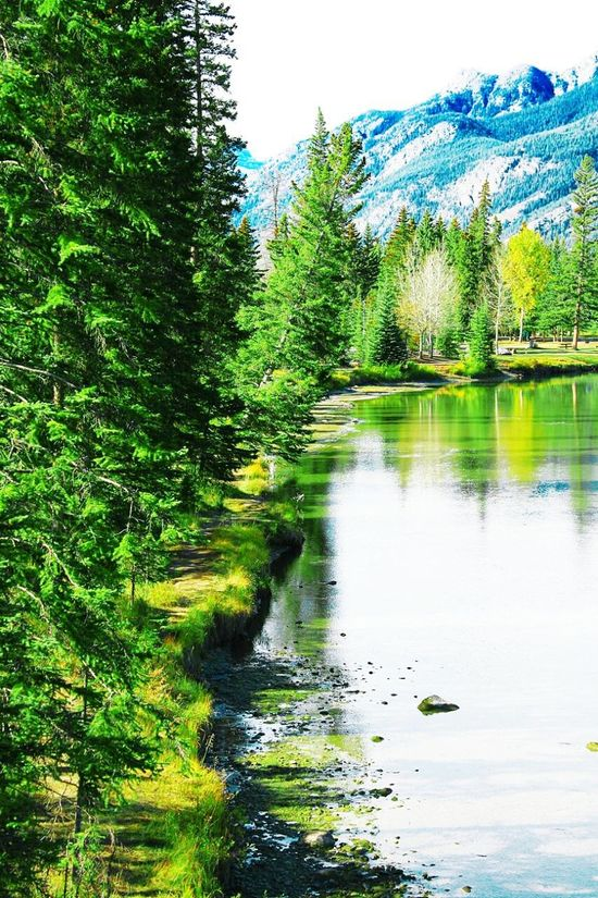 Banff  Banff National Park  Green Color Shallow Stream Rocky Mountains Rockies Nature Lover Nature Photography EyeEm Nature Lover Landscape Travel Photography Alberta Canada