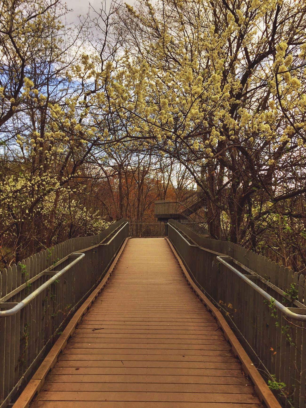 Spring walk Boardwalk EyeEm Nature Lover Spring Flowers Springtime Nature Spring Afternoon Outdoors Marshes Meadows