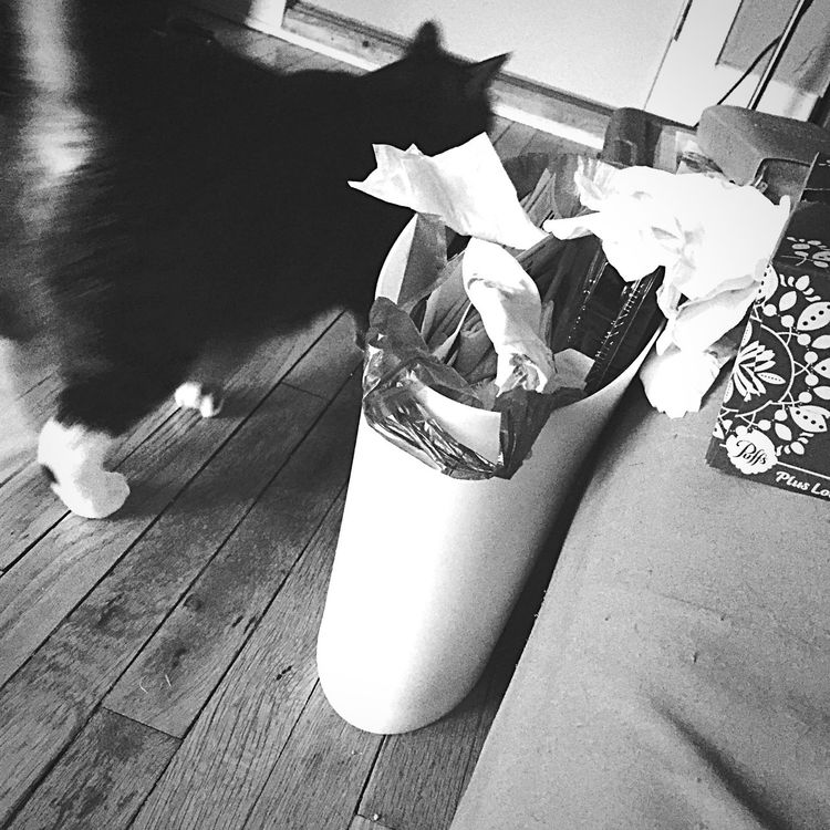 Being Sick Hate Being Sick Cat Tissues Trash Blackandwhite Black & White That's It