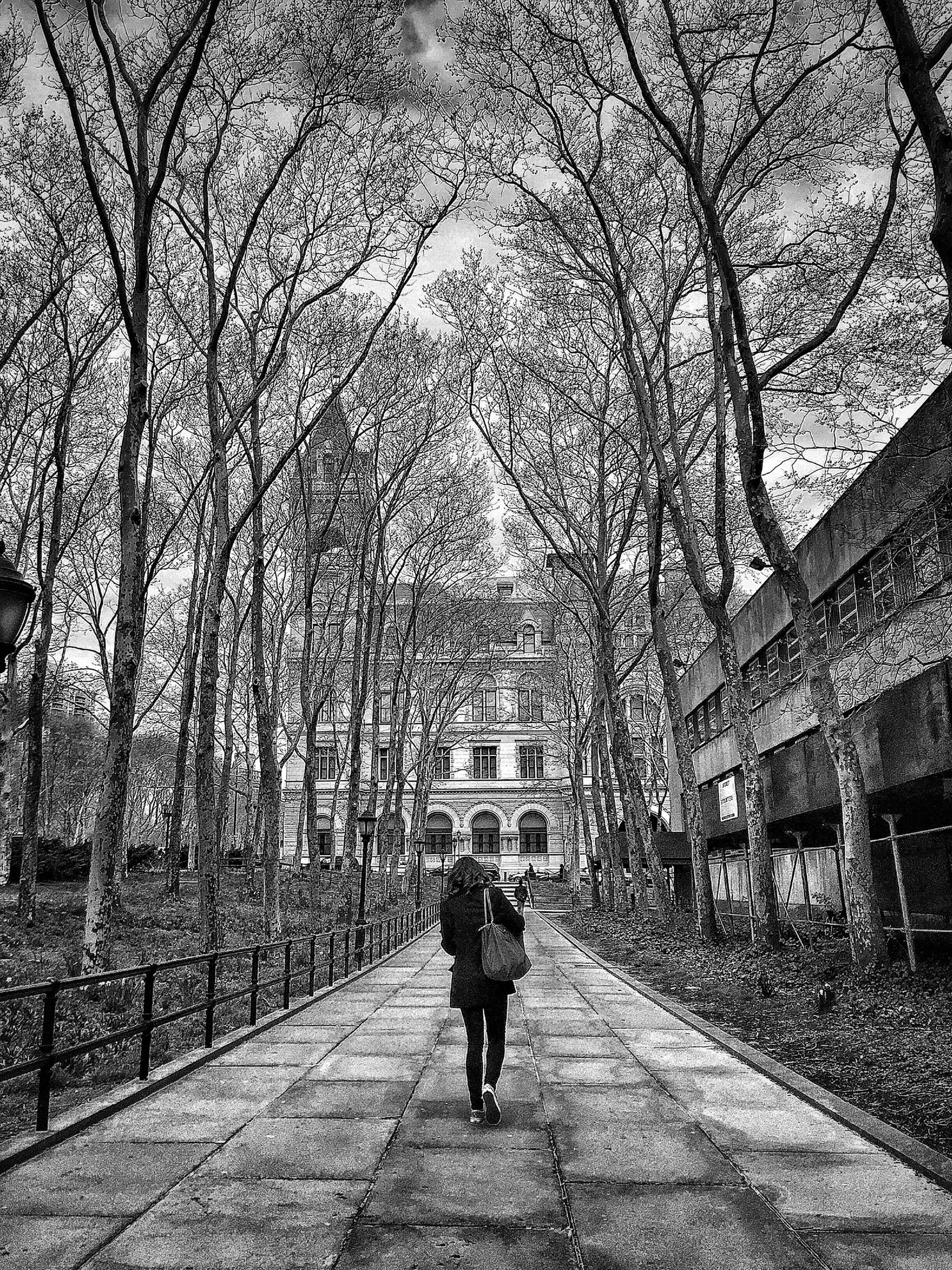 full length, tree, rear view, walking, the way forward, lifestyles, men, bare tree, transportation, built structure, architecture, person, leisure activity, building exterior, street, diminishing perspective, vanishing point