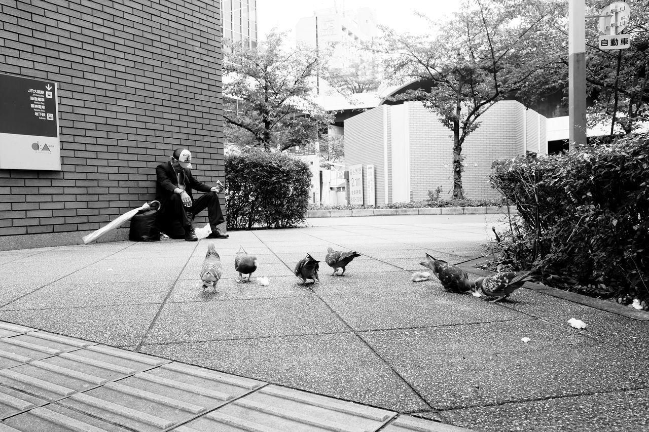 Birdman and pigeons Adult Animal Themes Architecture Birddog Birds Building Exterior Built Structure City Day Osaka,Japan Outdoors People Pigeons Real People
