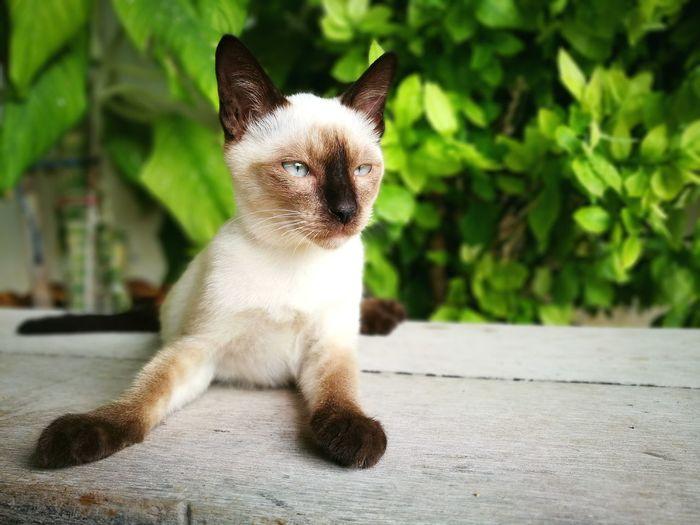 Close-up Cat Pets Domestic Cat Animal EyeEm Art Relaxing Street Photography สระบุรี Photography Thailand Traveling Travel Hi! Hello ❤