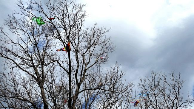 Kite Festival Austin Texas Flying A Kite Kite In Tree Kite Flying Kite Competition Sky Trees Showcase March Landscapes With WhiteWall Urban Spring Fever