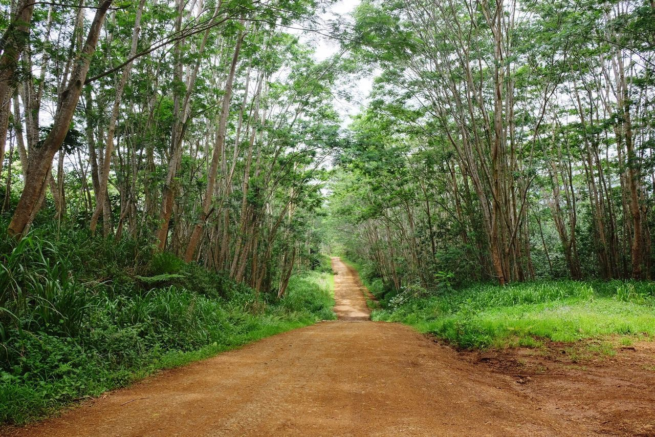Dirt Road Amidst Trees At Forest