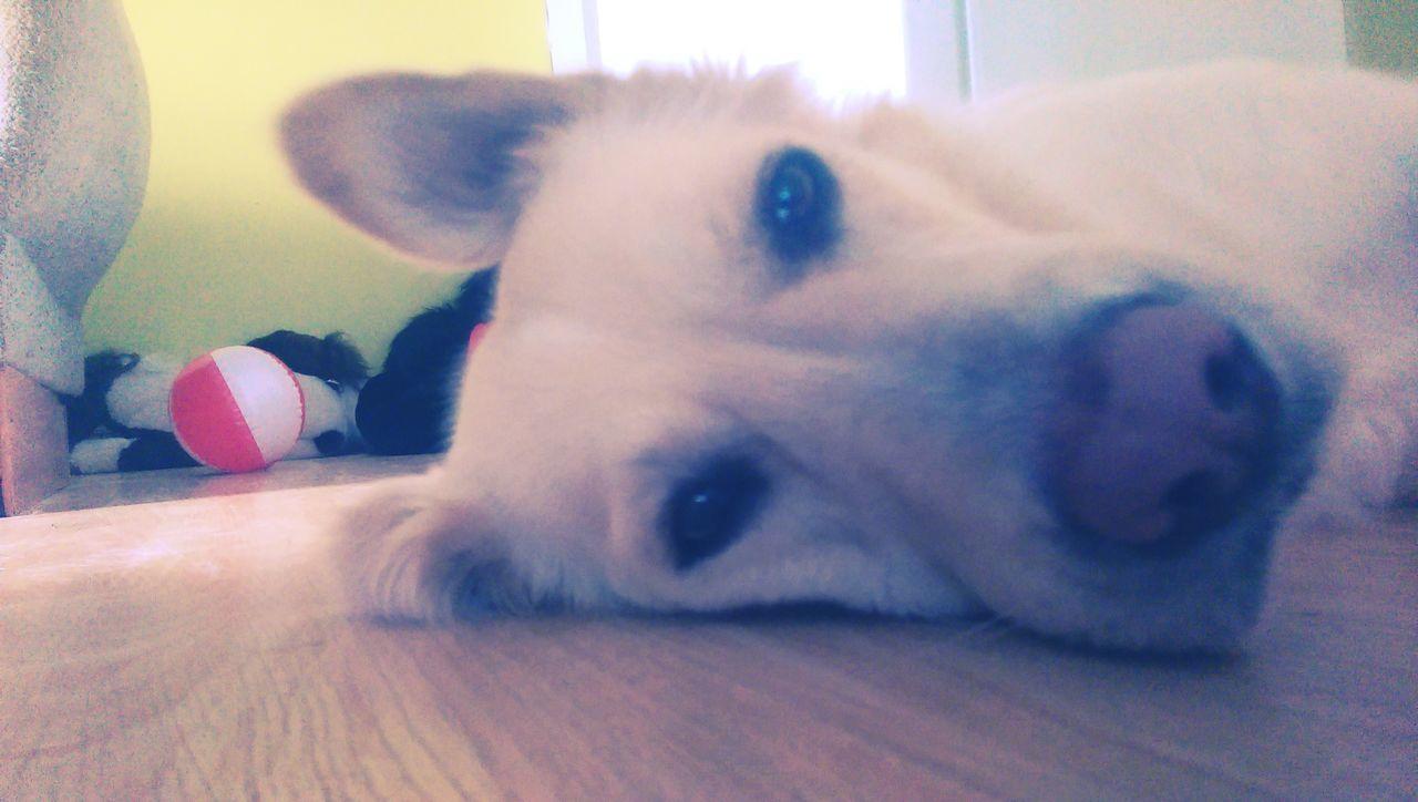 Relaxing Enjoying Life Dog❤ Sleepyhead