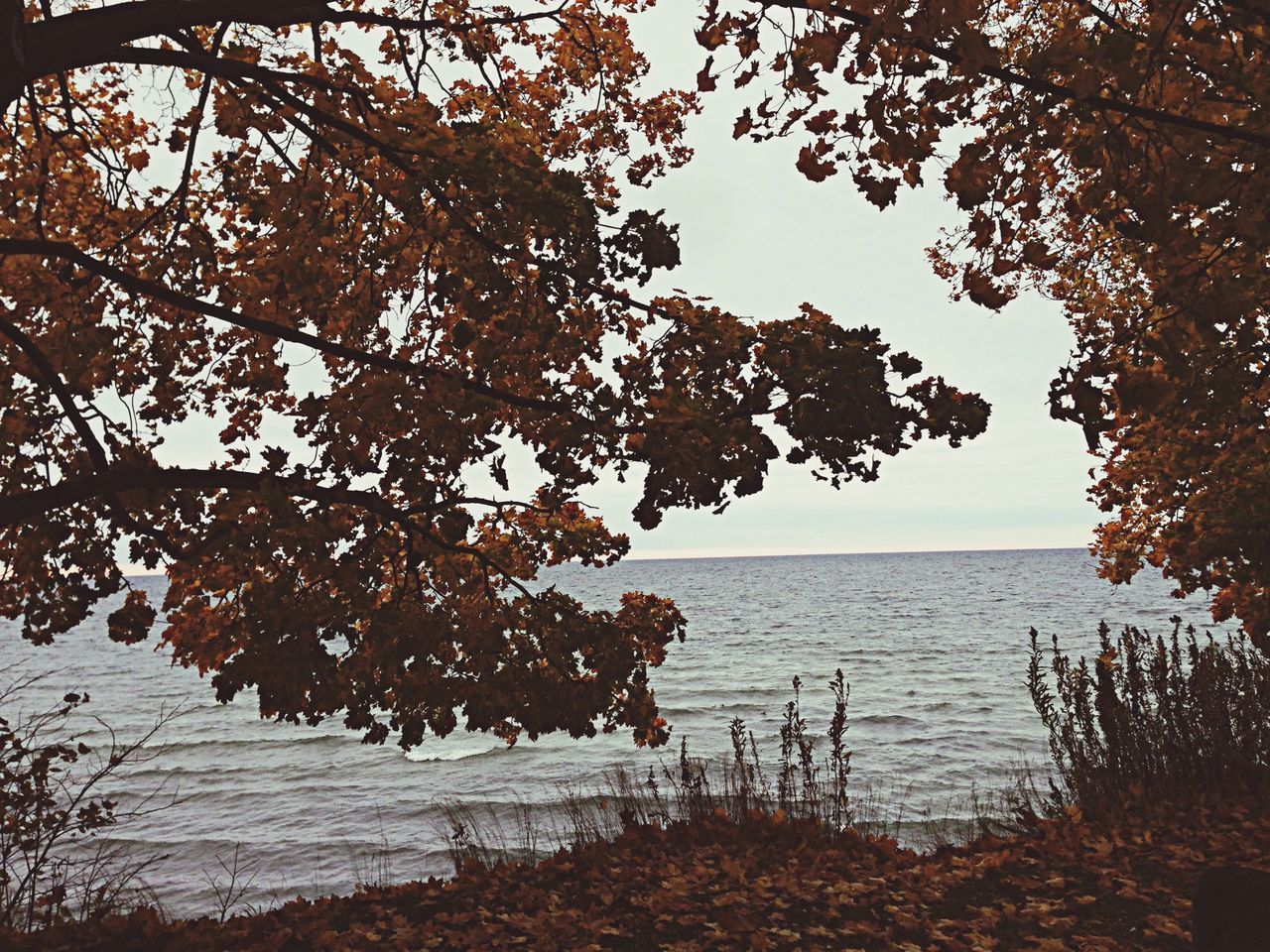 tree, nature, water, beauty in nature, lake, no people, branch, tranquility, growth, outdoors, scenics, sky, day