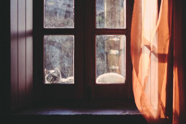 Light And Shadow EyeEm Best Shots Cat♡ Vacations Sunnyday Friends ❤ BirthdayWeekend Window Neighbourhood Theresalwaysacat