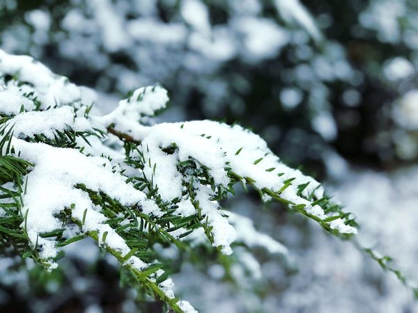 Cold Temperature Winter Snow Nature Weather Frozen Outdoors Beauty In Nature Day Growth Plant Close-up Fragility Focus On Foreground No People Ice Tree Branch Tranquility Freshness