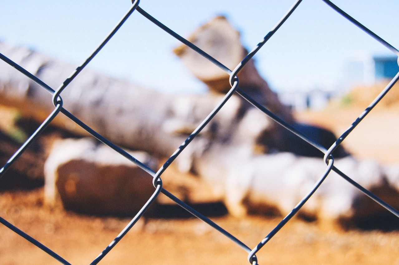 Beautiful stock photos of metal, Backgrounds, Castellar del Vallès, Chainlink Fence, Close-Up