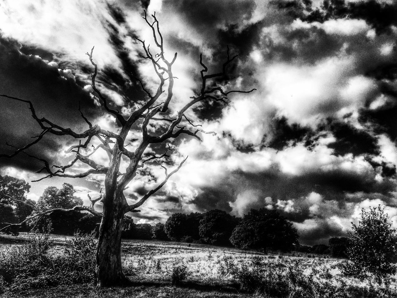Monochrome Photography Tree Tranquil Scene Tranquility Scenics Landscape Branch Tree Trunk Bare Tree Beauty In Nature Cloud - Sky Non-urban Scene Nature Sky Remote Growth Solitude Day Cloud Cloudy Outdoors IPhoneography London Hampstead Heath Snapseed