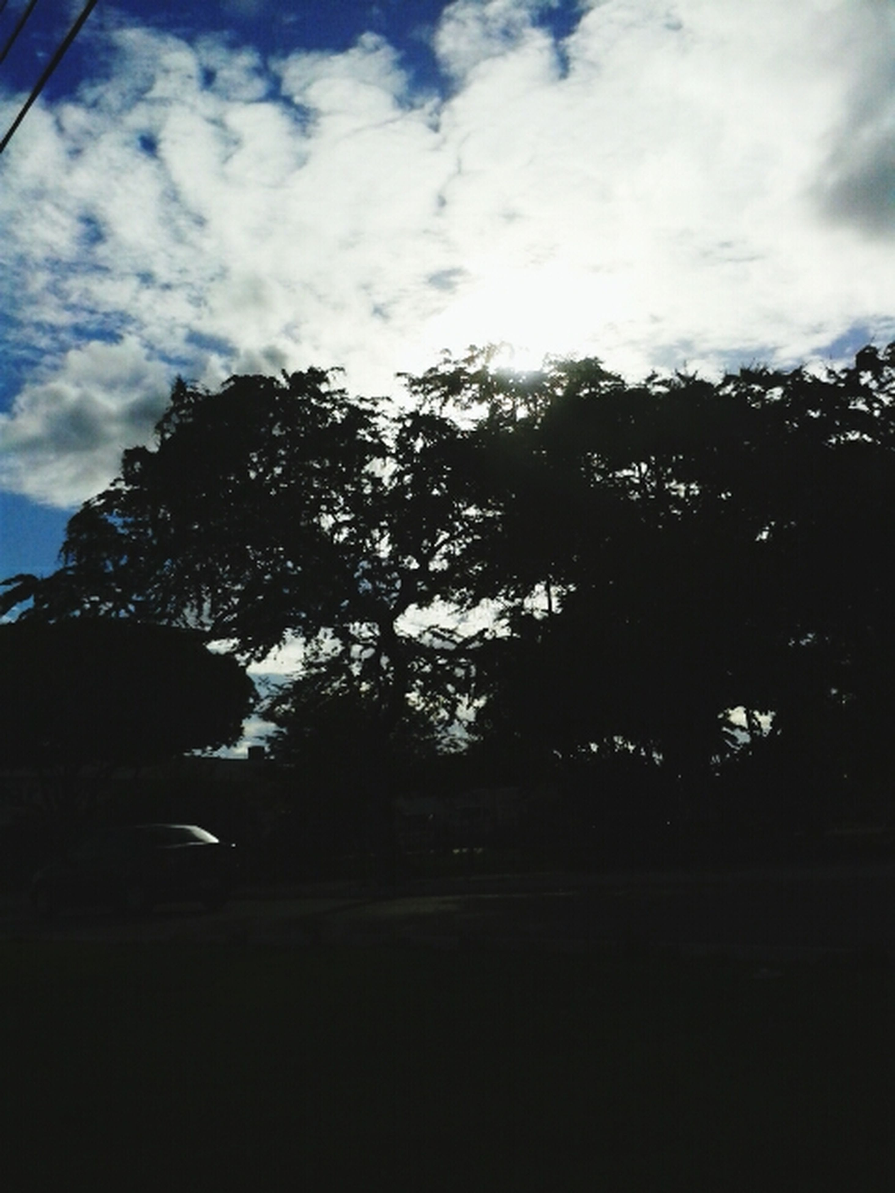 tree, sky, cloud - sky, silhouette, cloud, low angle view, tranquility, growth, cloudy, nature, tranquil scene, beauty in nature, scenics, no people, sunlight, outdoors, day, dusk, branch, dark