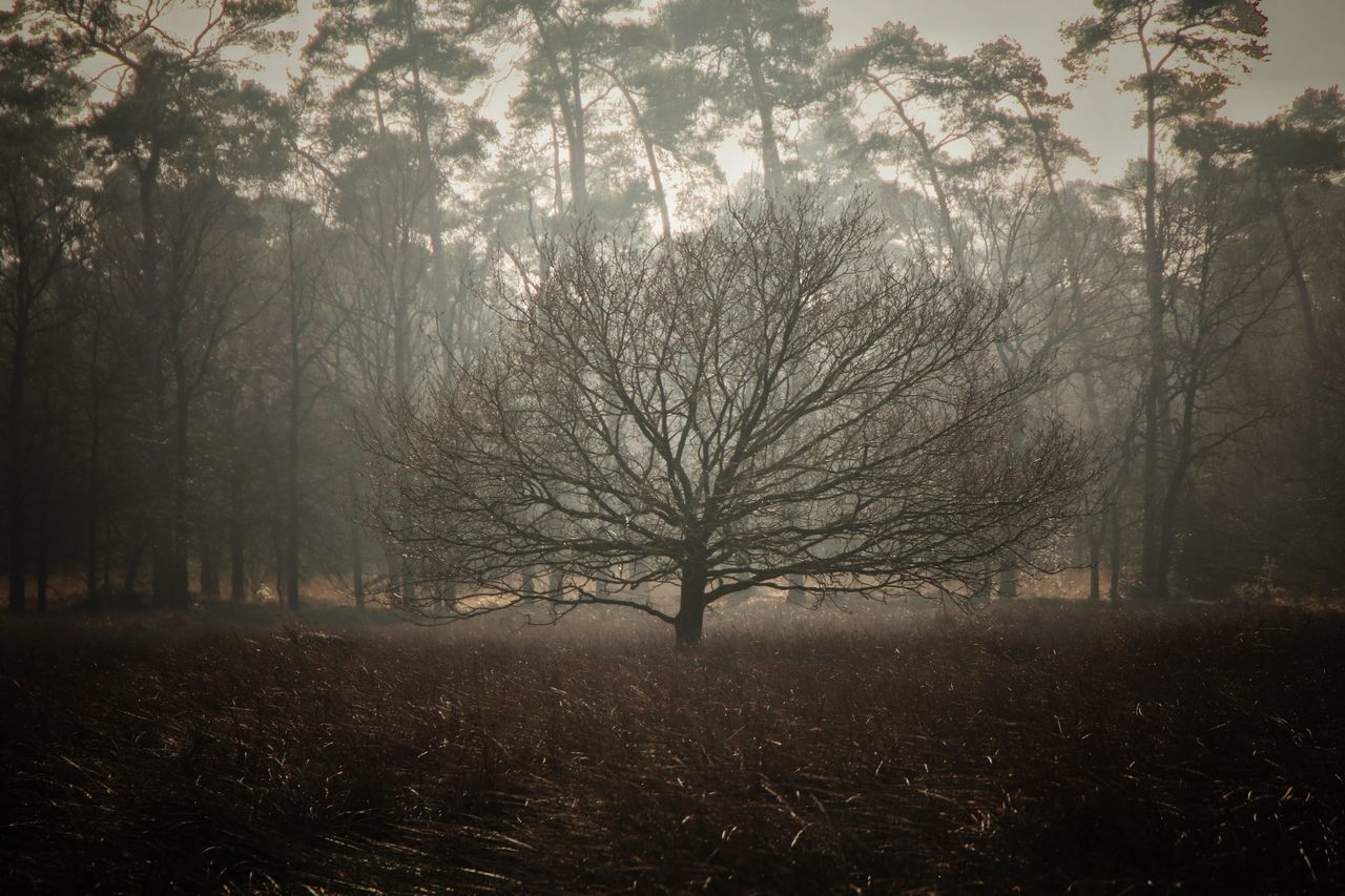 Nature Tree Beauty In Nature Forest Outdoors Tranquil Scene No People Snapspeed Capture The Moment Eye4photography  EyeEmBestPics Simple Photography Walking EyeEm Nature Lover Canon EOS 70D Canon Foggy Misty Misty Morning Foggy Morning Grass Treescollection Branch Scenics Dutch Countyside