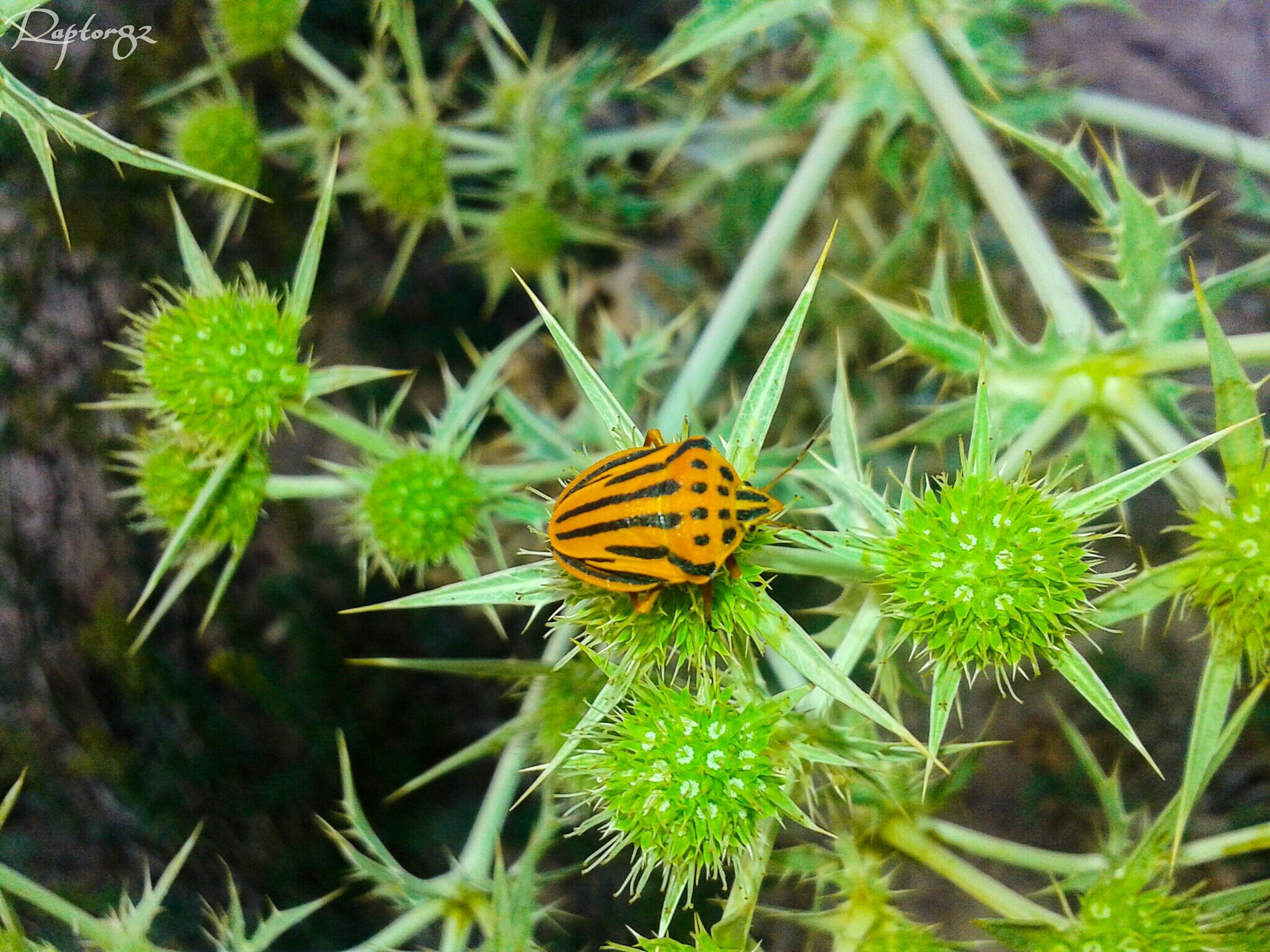 insect, animals in the wild, one animal, animal themes, wildlife, flower, butterfly - insect, plant, growth, fragility, nature, close-up, high angle view, beauty in nature, butterfly, focus on foreground, green color, freshness, leaf, pollination