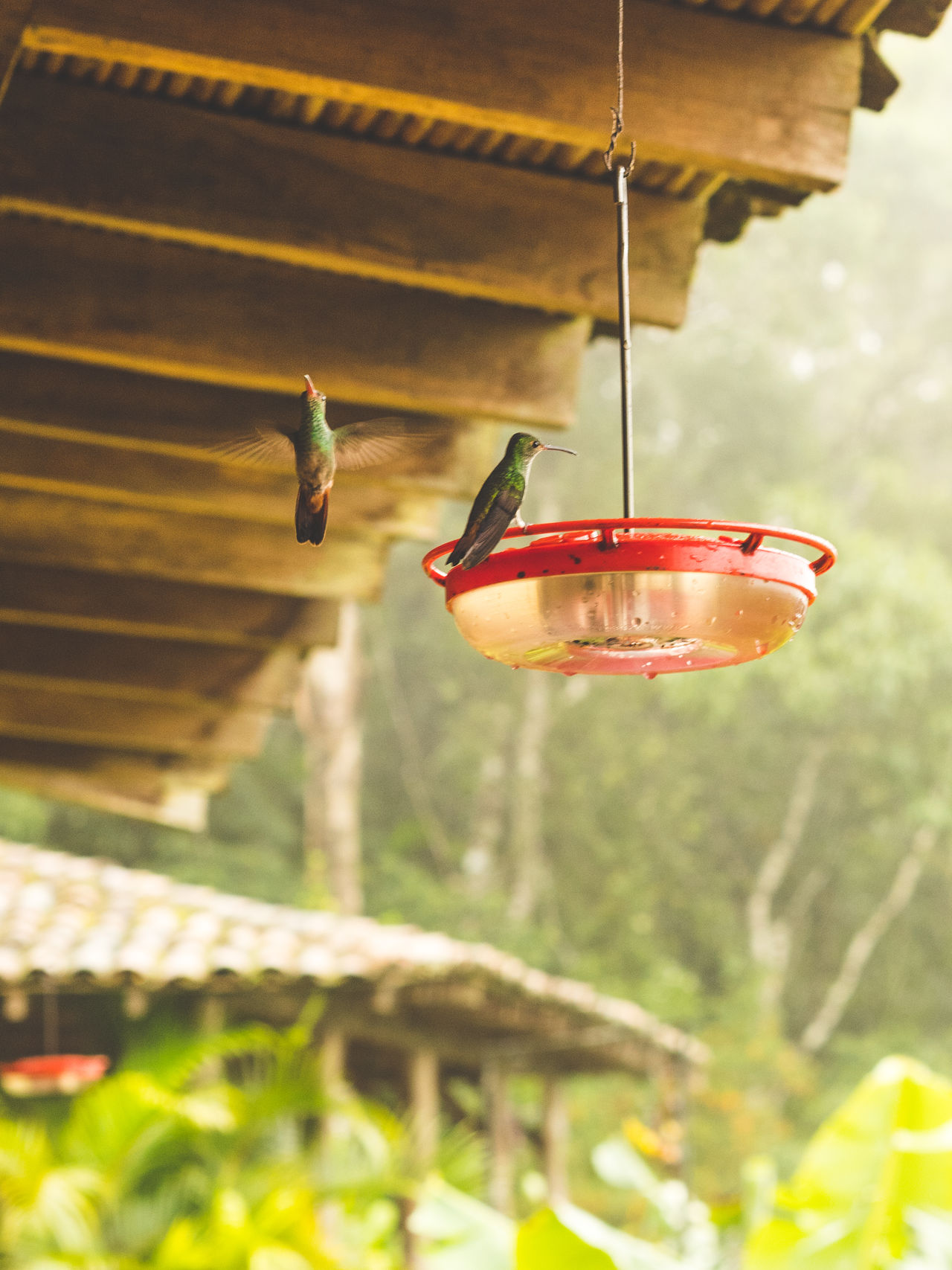 Beautiful stock photos of kolibri,  Bird,  Bird Feeder,  Close-Up,  Day