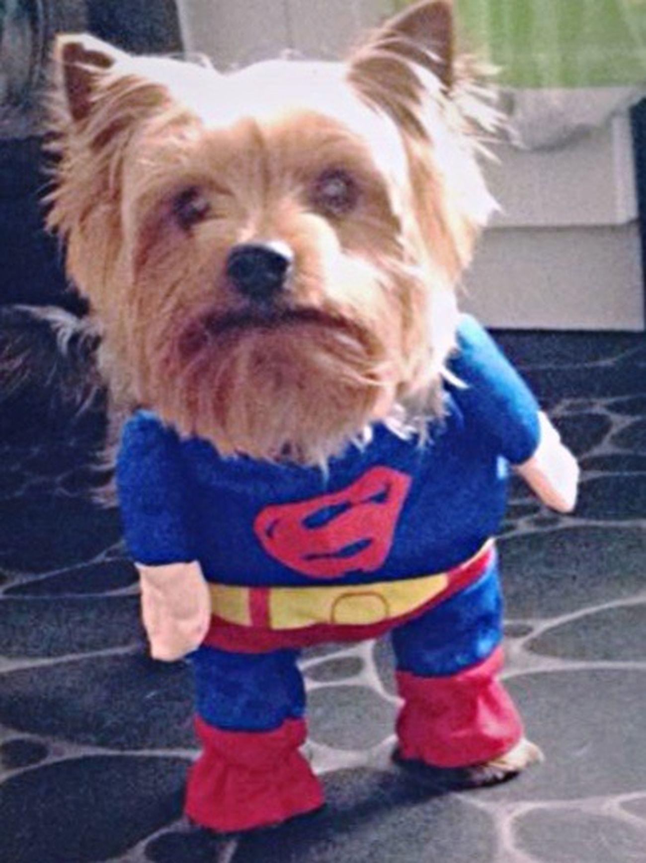 Diesel Superdog