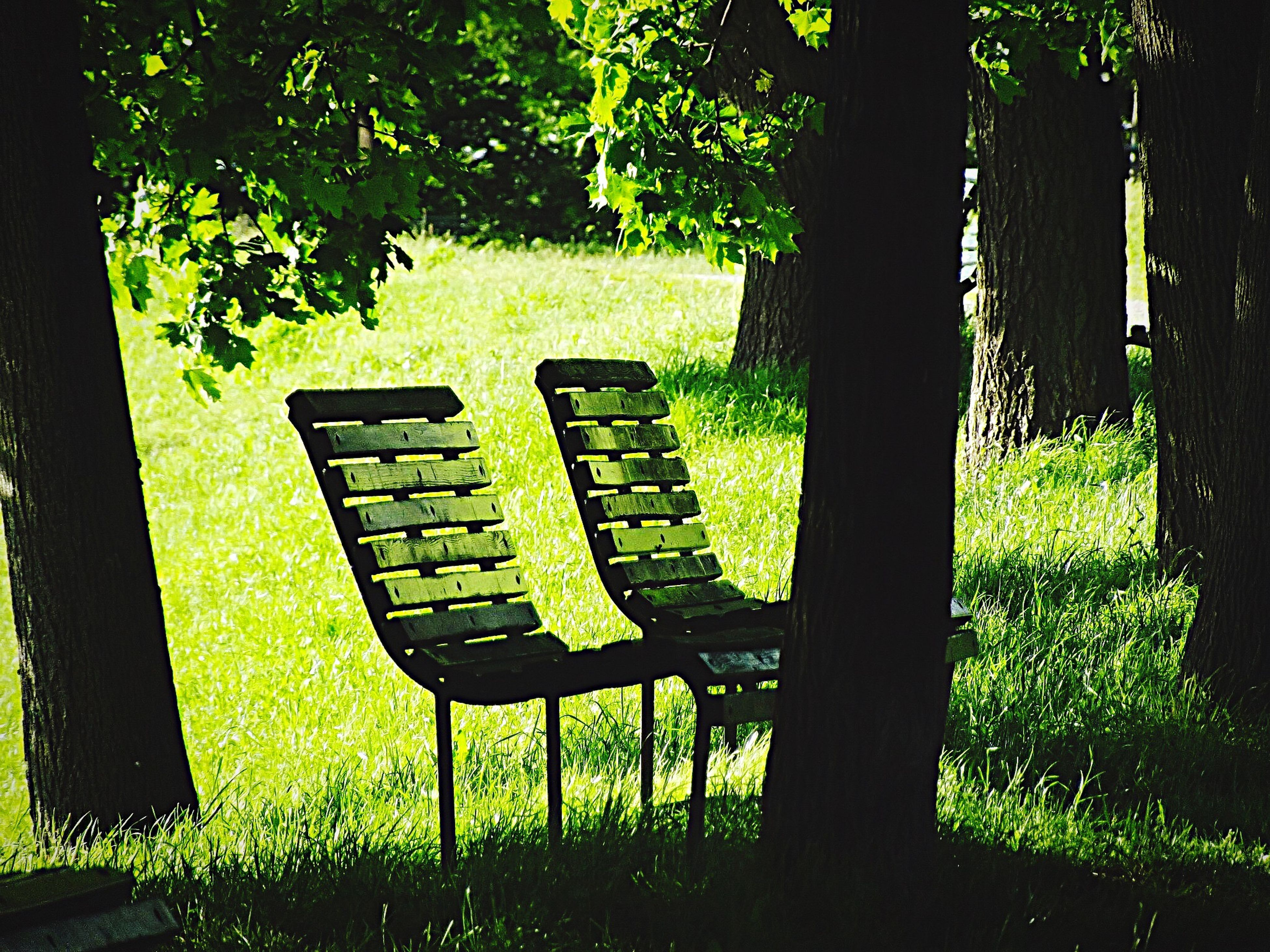 grass, tree, chair, empty, green color, bench, absence, park - man made space, park bench, growth, tranquility, seat, lawn, sunlight, shadow, nature, table, grassy, field, park
