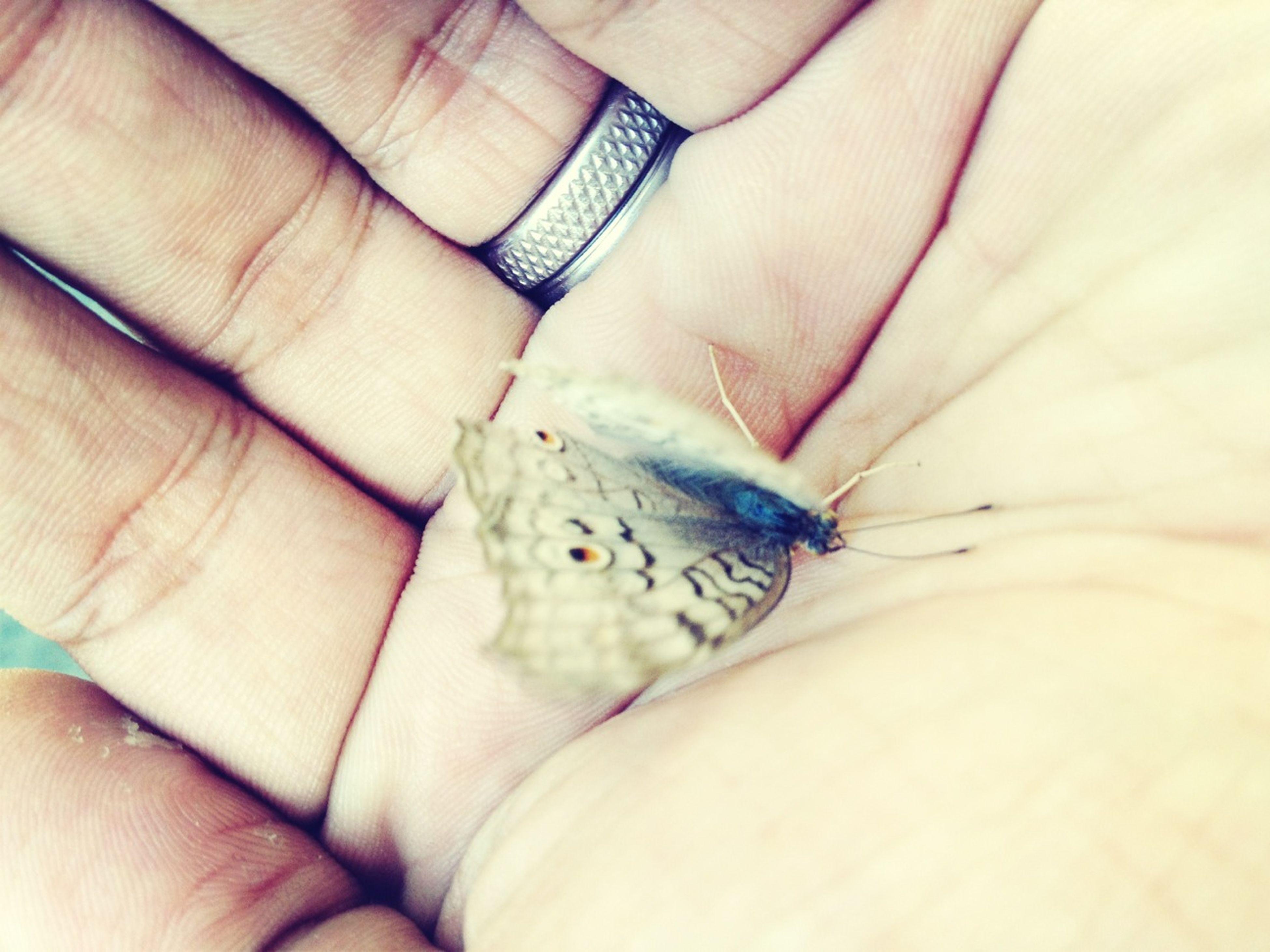 Floating Like A Butterfly