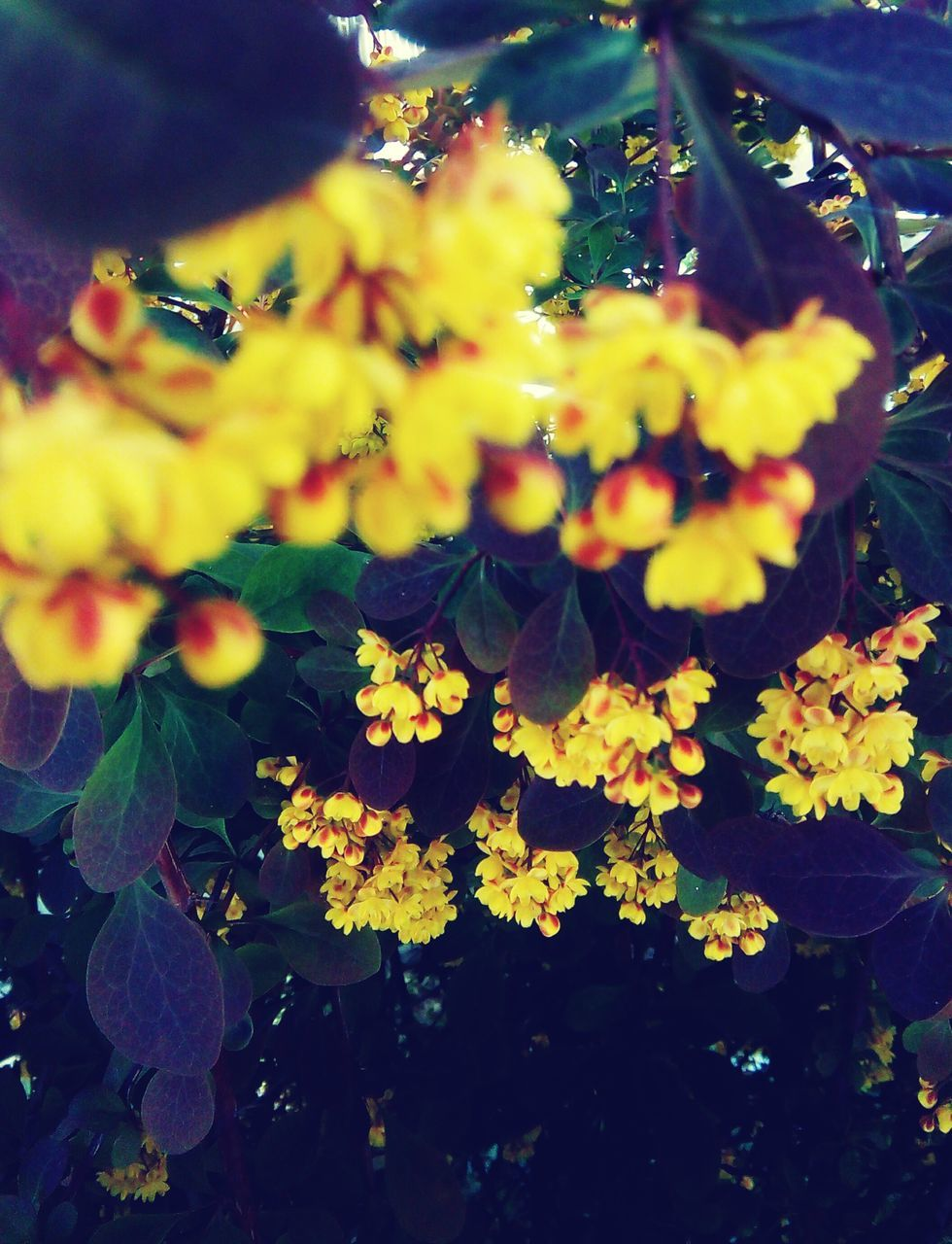 flower, growth, yellow, nature, plant, freshness, beauty in nature, fragility, spring, summer, no people, outdoors, close-up, day
