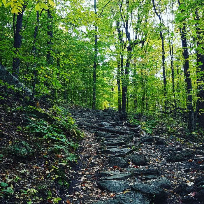 Lauriault Hiking Trail :) How beautiful is nature right?!! Gatineau Park Green Color Nature Beauty In Nature Tranquility Outdoors No Filter Beautiful Hike Hiking Exploring First Snow Happy Place Autumn