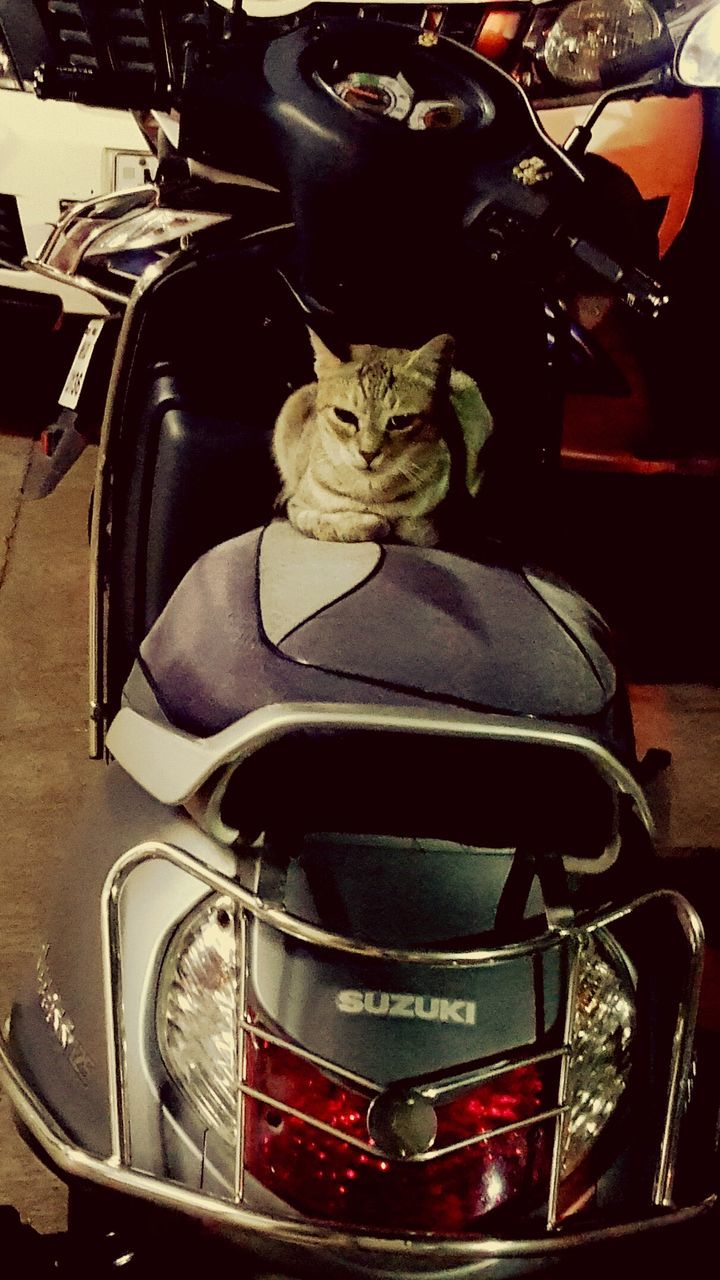 domestic cat, pets, domestic animals, mammal, one animal, animal themes, sitting, feline, cat, no people, indoors, land vehicle, day, close-up