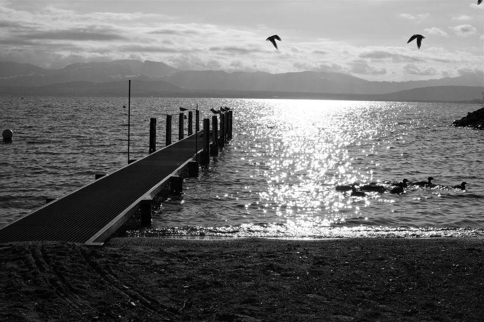 Lac Léman Switzerland Lake Blackandwhite Landscape
