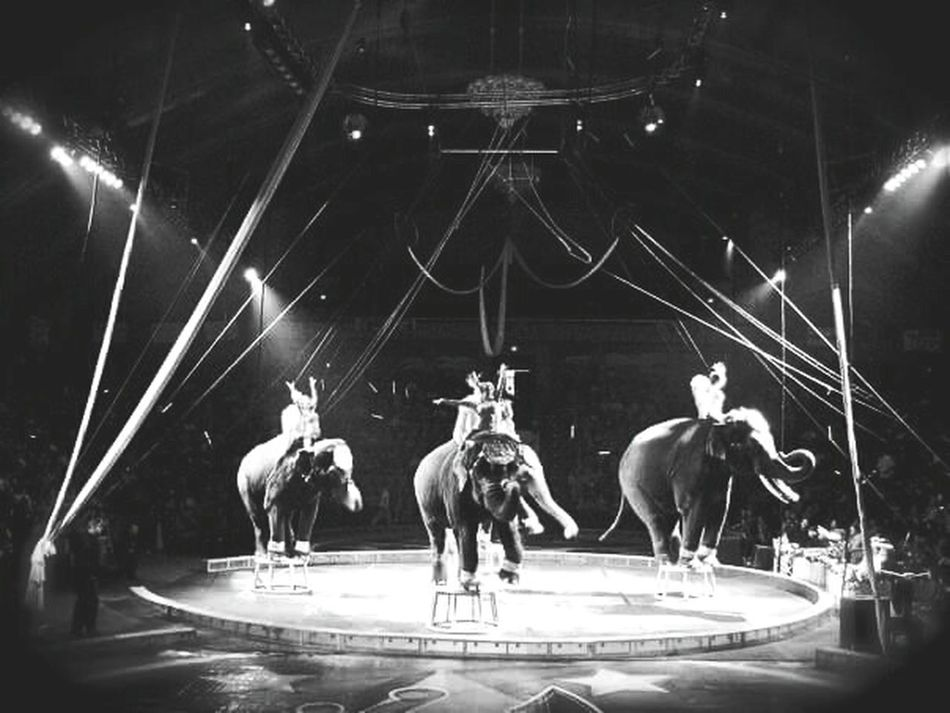 Night at the circus. Circus Elephants Black And White Photography Black & White Circusimages Circusisintown Elephant Circus Tricks