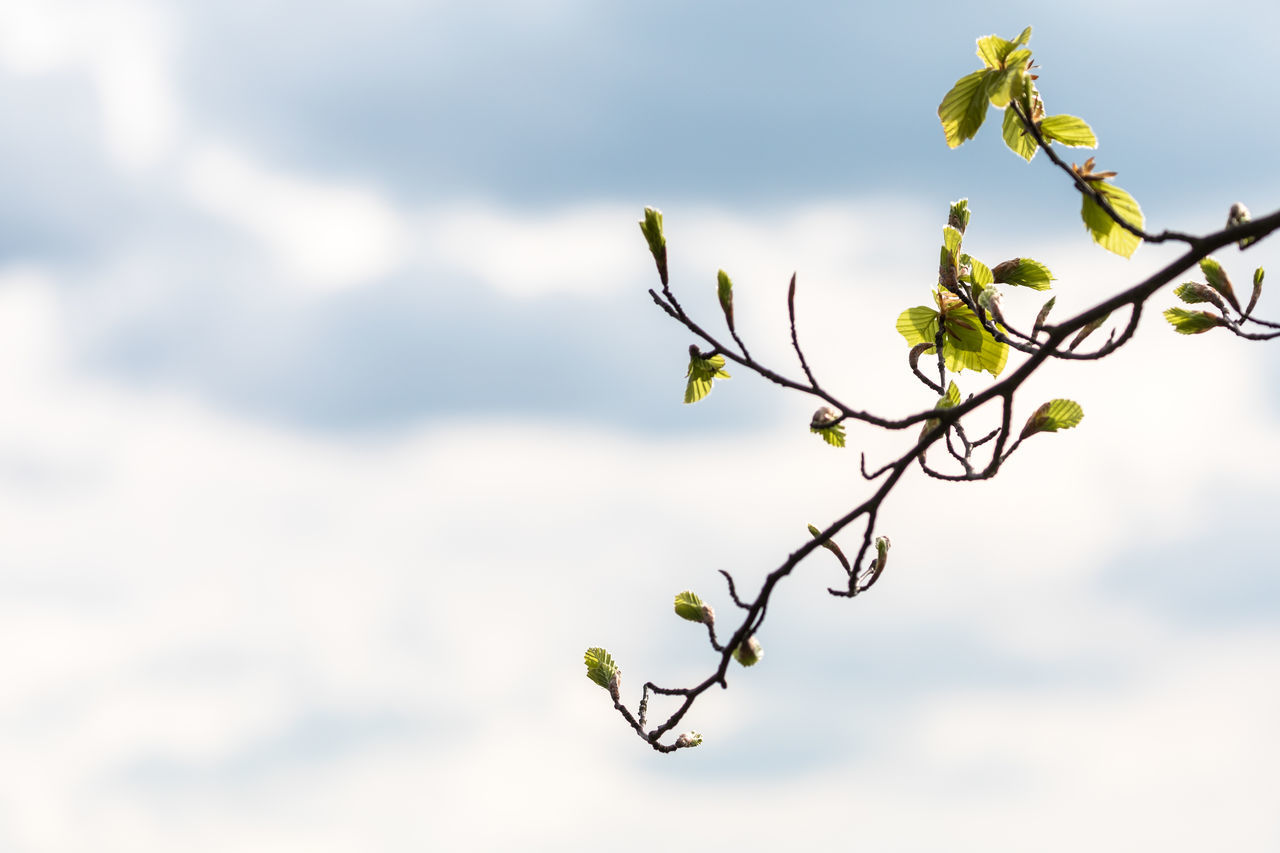 Beauty In Nature Branch Close-up Copy Space Day Flower Fragility Freshness Green Growth Landscape Leaf Nature No People Outdoors Plant Sky Spring Tree Twig