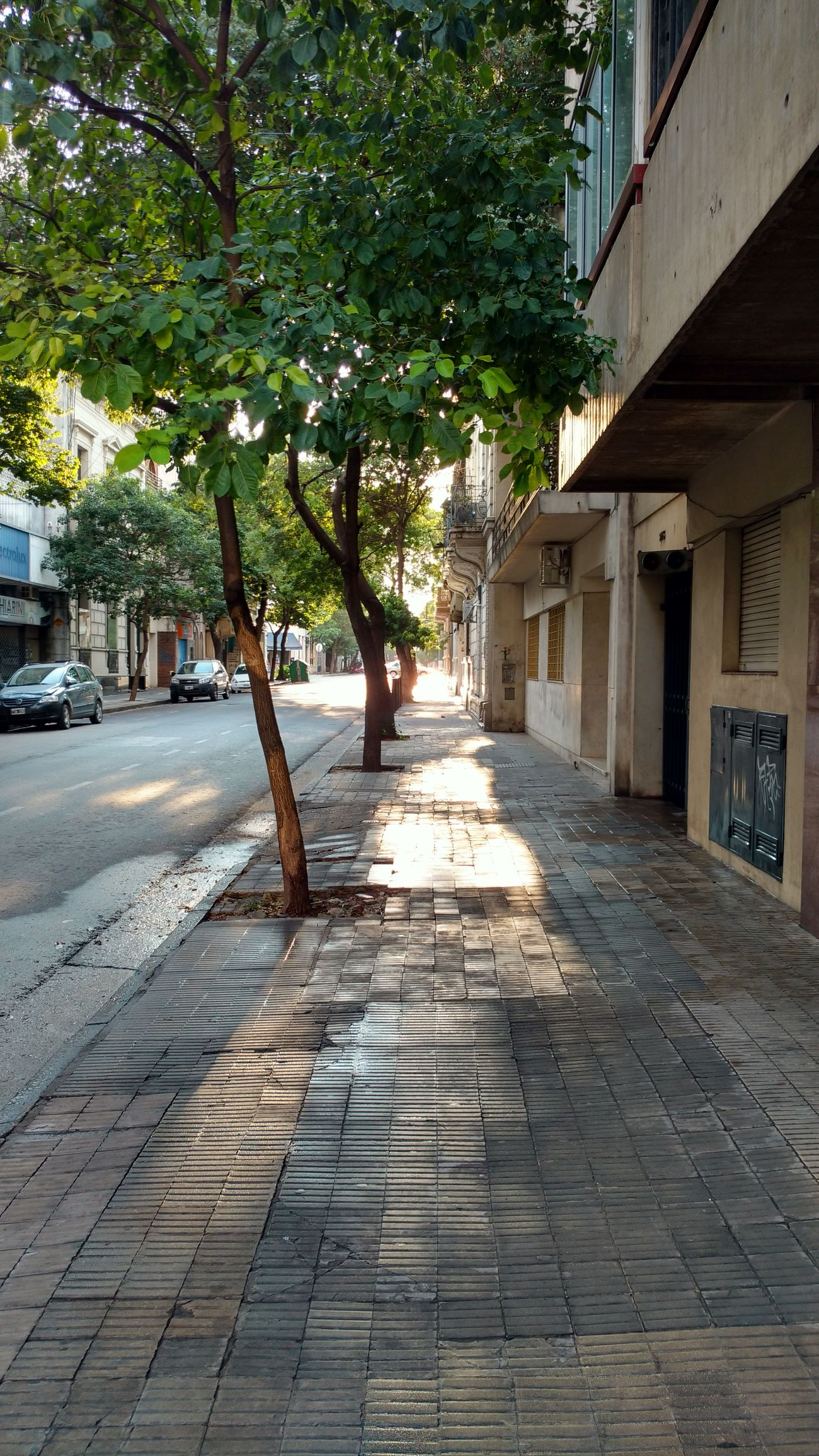 Tree Street Architecture No People City Building Exterior Outdoors Day Rayos De Sol Rays Of Sunshine Rosario, Argentina Moorning! Rosario, Santa Fe RosarioCity Moornig_capture Moornig_time