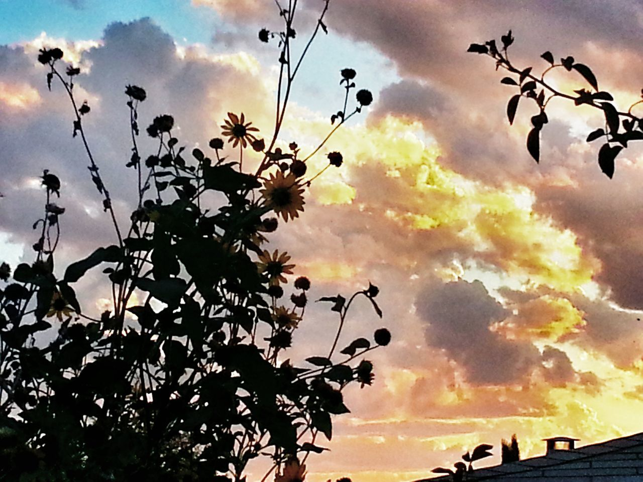 sky, sunset, nature, beauty in nature, silhouette, tree, growth, cloud - sky, outdoors, no people, low angle view, branch, day