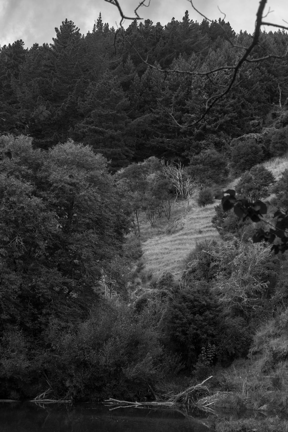Scenery of Maitai Beauty In Nature Blackandwhite Bw_collection Calm Canon Day Forest Grass Growth Landscape Lush - Description Maitai Nature New Zealand No People Non-urban Scene Outdoors River Scenics Sky Tranquility Tree EyeEmNewHere