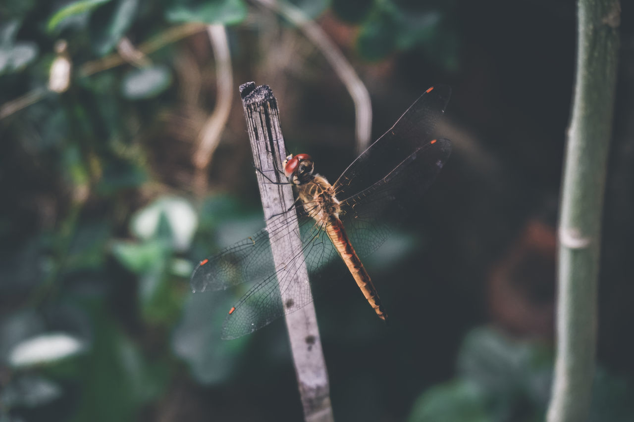 Dragonfly... Insect Animal Themes Outdoors Animals In The Wild Beauty In Nature Fragility Stories Journey Corner Day Memories Alpha Myhouseview